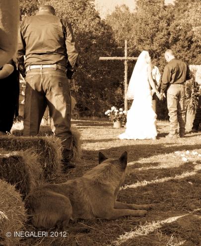 RWF Wedding-9