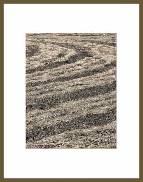 FramedS - Freshly Cut Hay 1