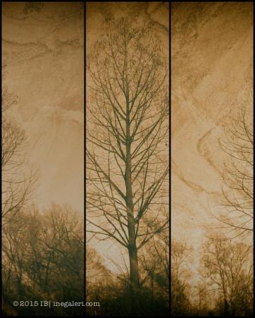 Cypress Triptych by Ine Burke-1