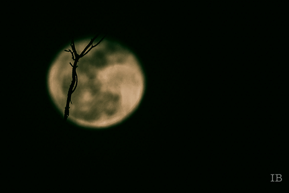 The Moon Last Night 2