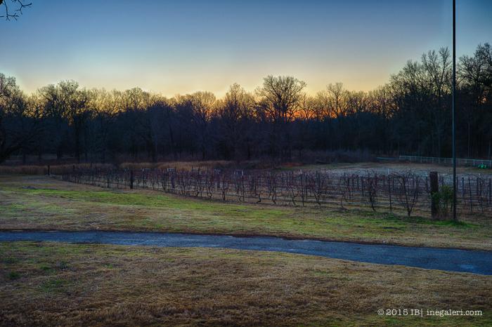 Morning Light Jan2015-1