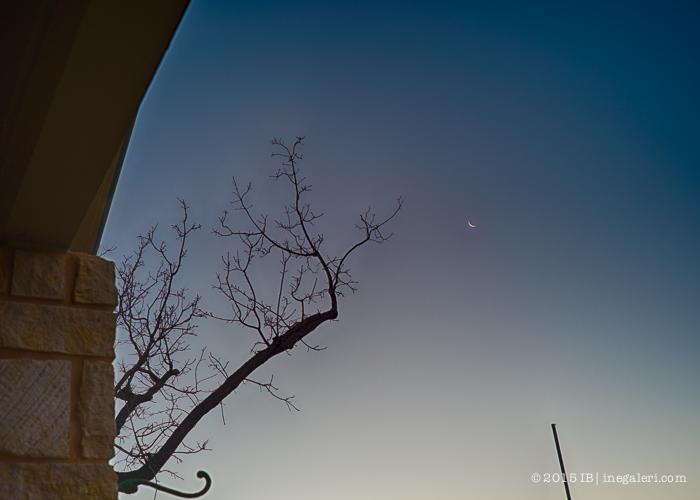 Morning Light Jan2015-2