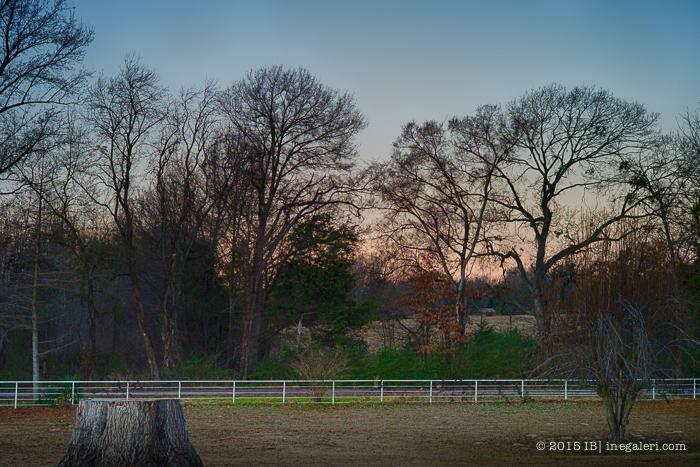 Morning Light Jan2015-3