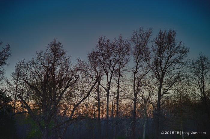 Morning Light Jan2015-4