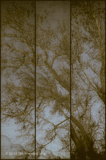 On the Edge of the Piney Woods Triptych