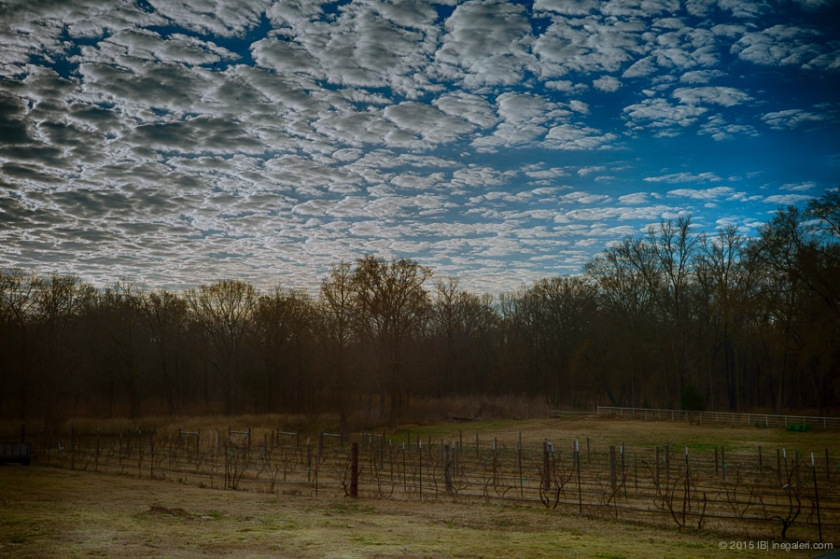 Altocumulus in Morning | Feb 2015-7