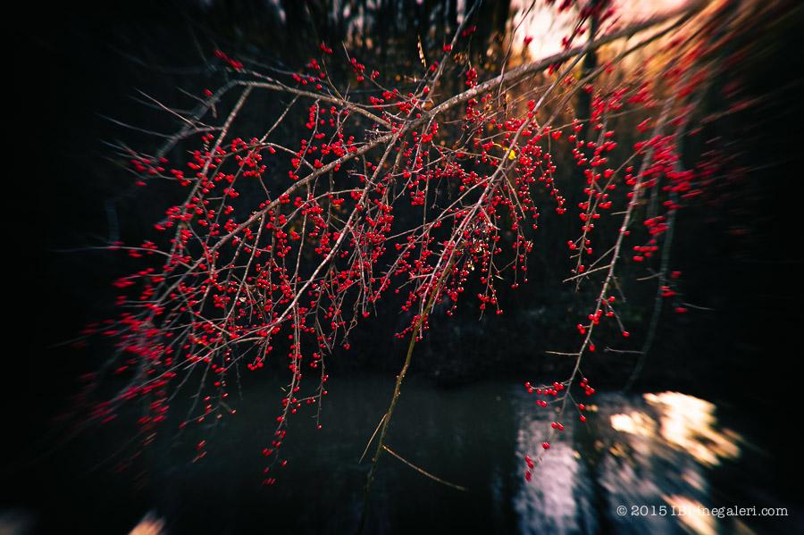 Possumhaw by the Bridge-2