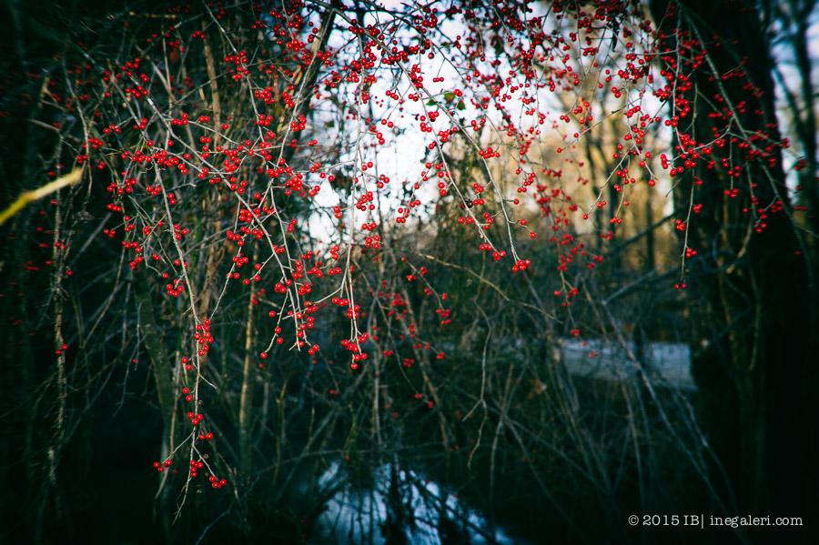 Possumhaw by the Bridge-3