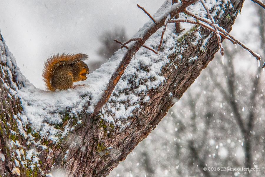 Snow Feb 2015 |IB-1