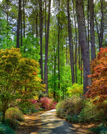 Azalea Trail 2