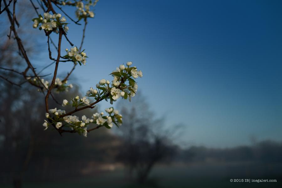 The Beginning of Spring 2015 | IBurke-1