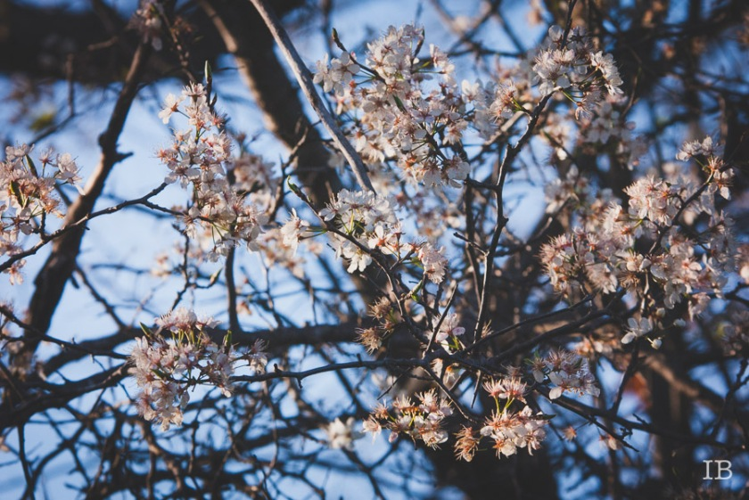 Wild Tree 2015 |IB-9