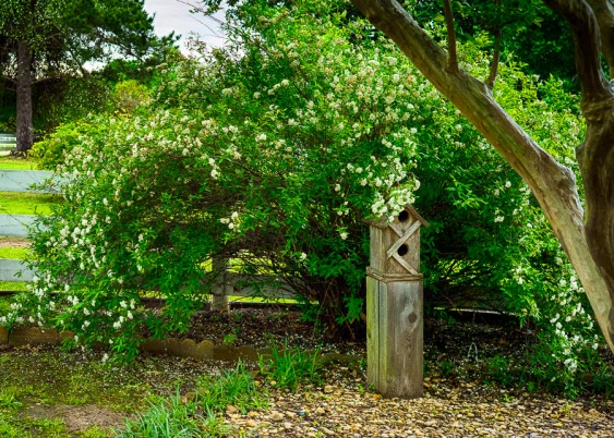 One of the birdhouses in the nooks of the garden. This place is, without a doubt, a bird sanctuary.