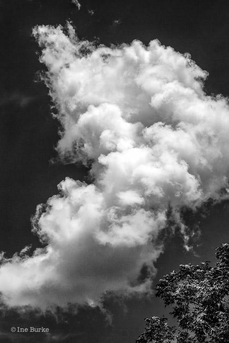 Clouds Mocking Trees by Ine Burke-1