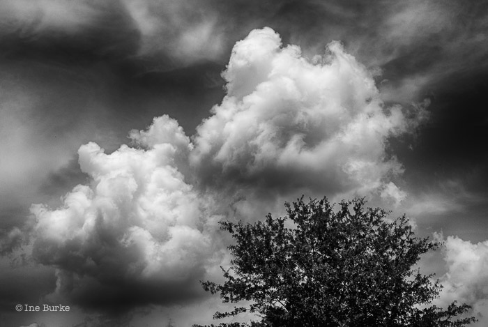 Clouds Mocking Trees by Ine Burke-2
