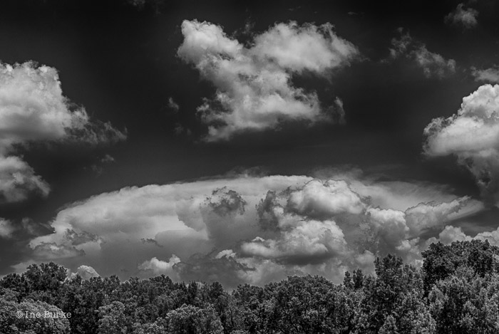 Clouds Mocking Trees by Ine Burke-3