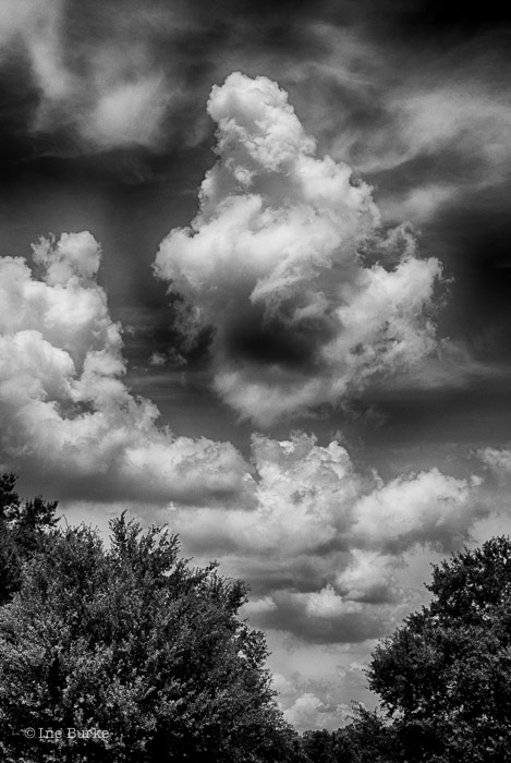 Clouds Mocking Trees by Ine Burke-4
