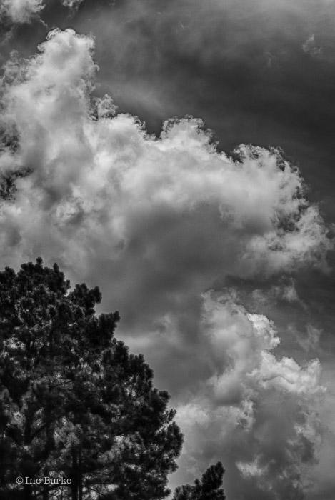 Clouds Mocking Trees by Ine Burke-5