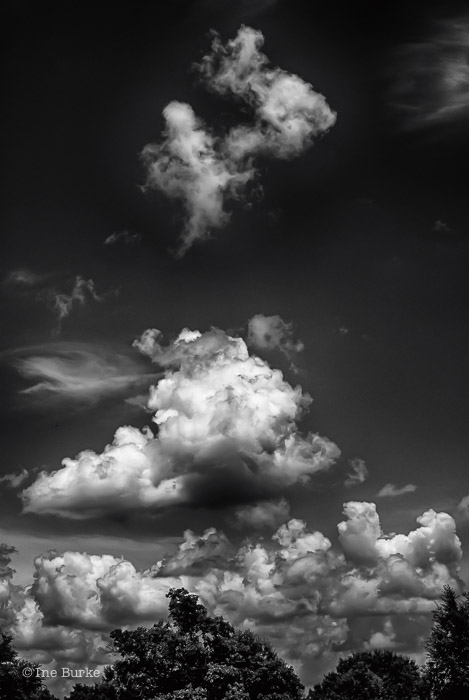 Clouds Mocking Trees by Ine Burke-6