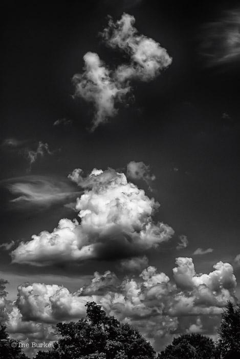 Clouds Mocking Trees by Ine Burke-6