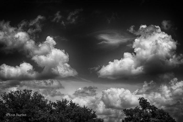 Clouds Mocking Trees by Ine Burke-7