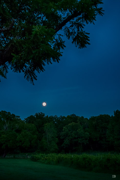 Moon Rising on July 1st, 2015 - 9.02 PM