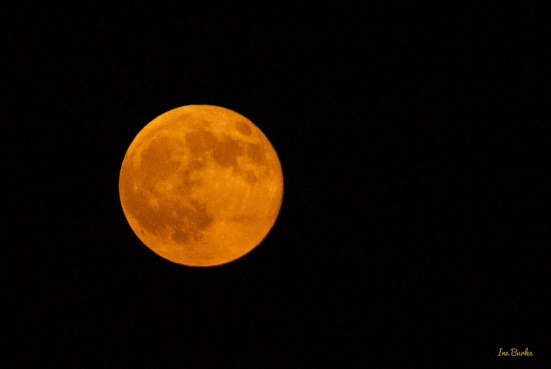20150829-149_0125Sturgeon Moon