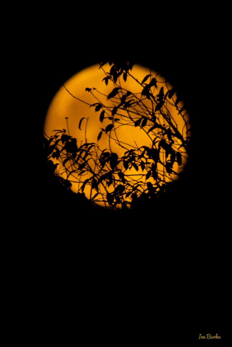 20150829-149_0136Sturgeon Moon