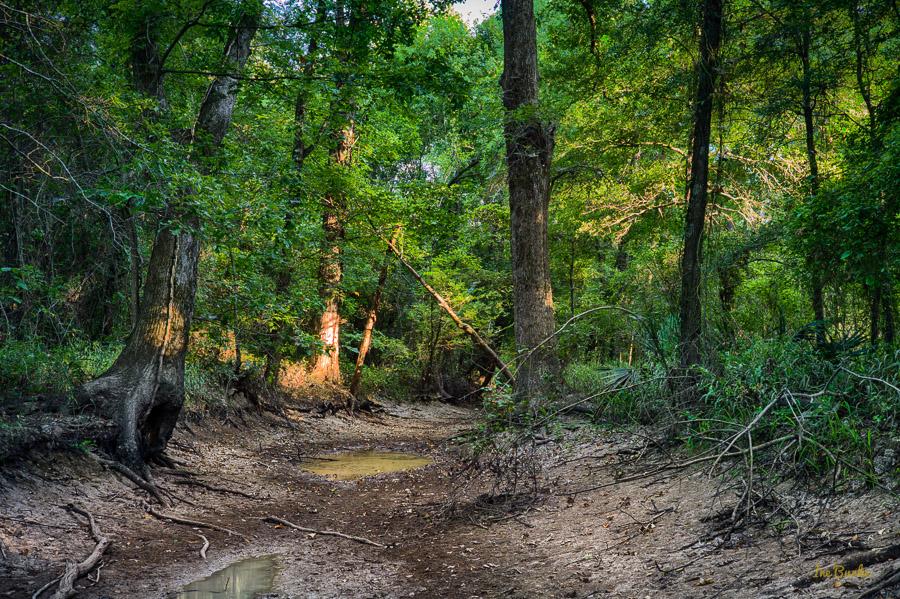 Aug2015 Dry Crooked Creek--2