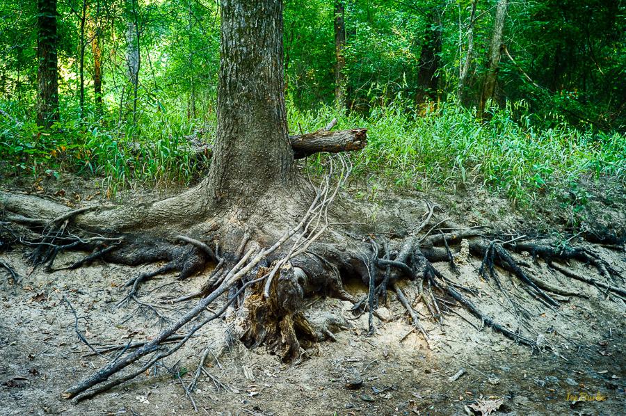 Aug2015 Dry Crooked Creek--3