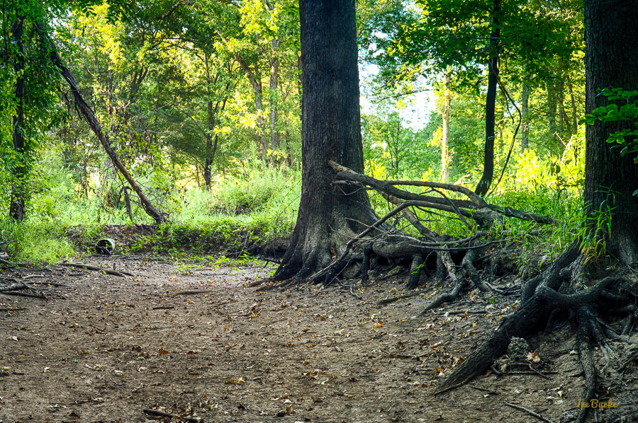 Aug2015 Dry Crooked Creek--4