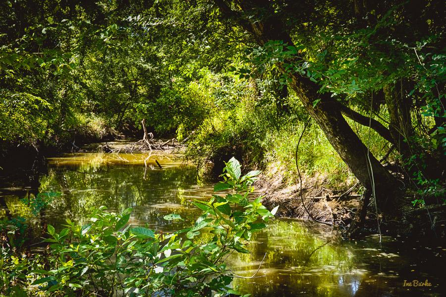 Aug2015 Mill Creek--2