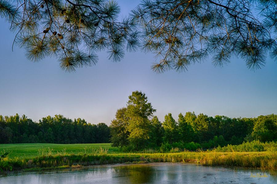 Aug2015 Pond-