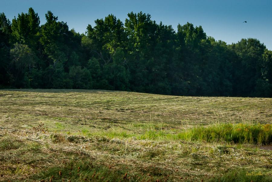 July 2015 Hay Mowing-0082
