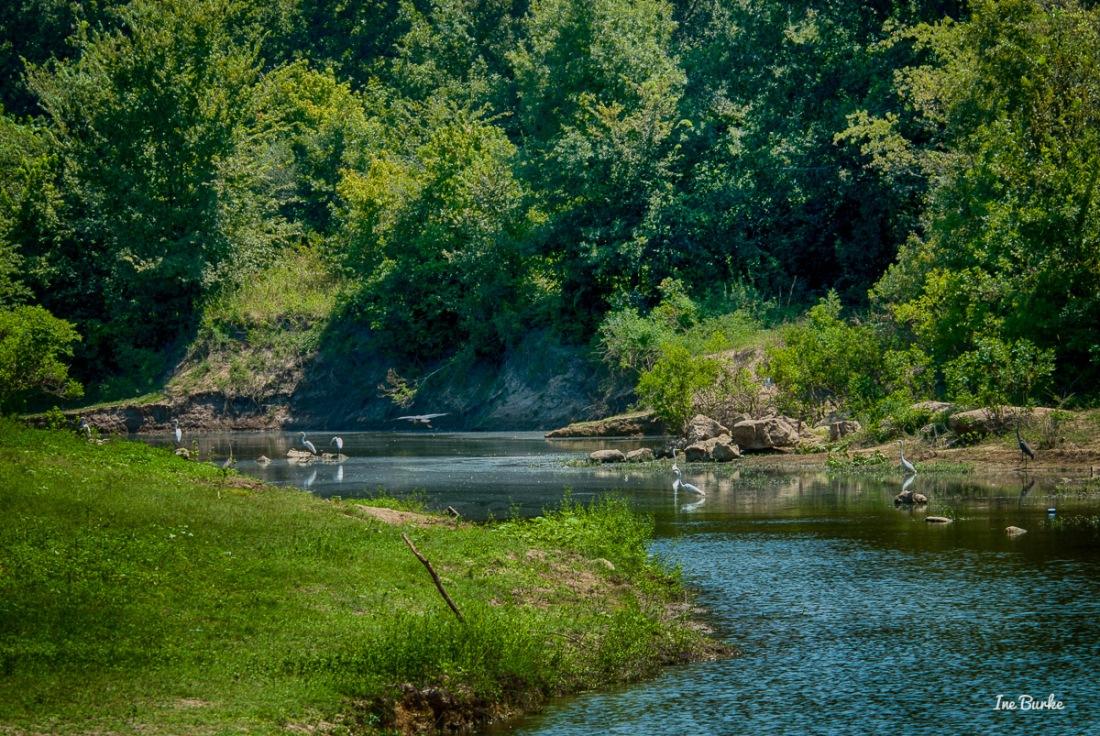 Sabine River Headwaters IB-2