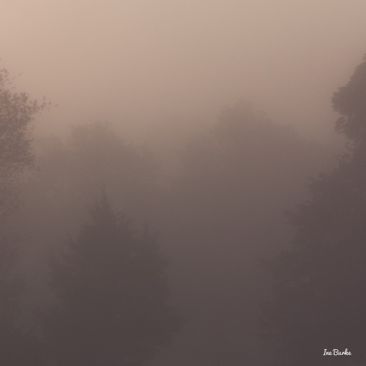 20150826-149_0099Foggy Morning