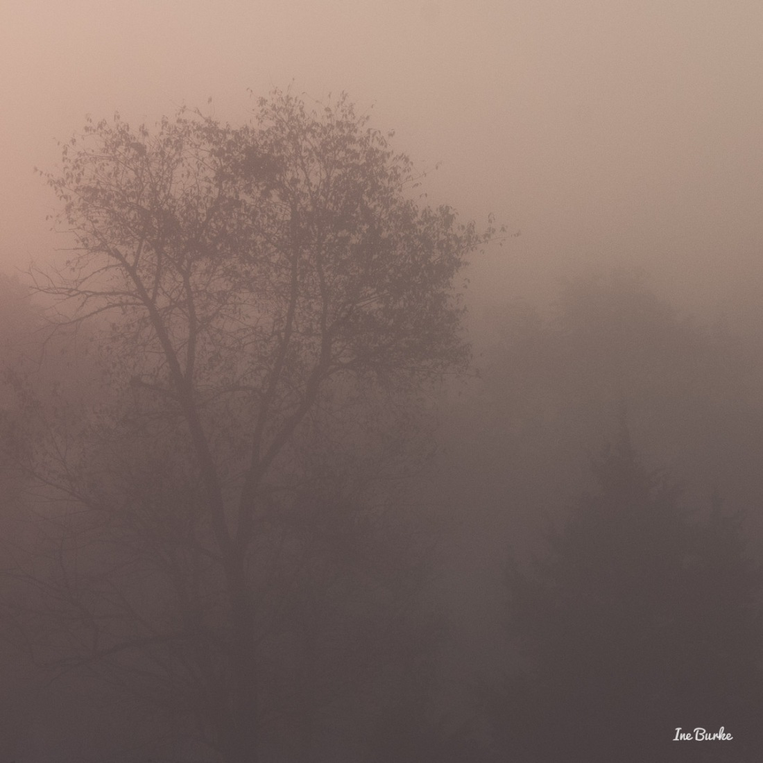 20150826-149_0100Foggy Morning