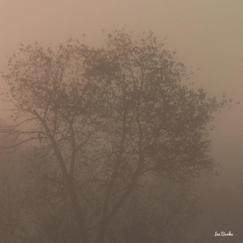 20150826-149_0102Foggy Morning