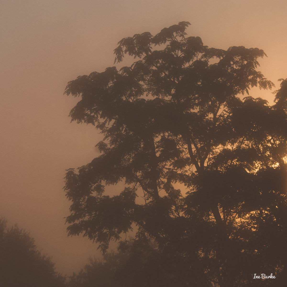20150826-149_0106Foggy Morning