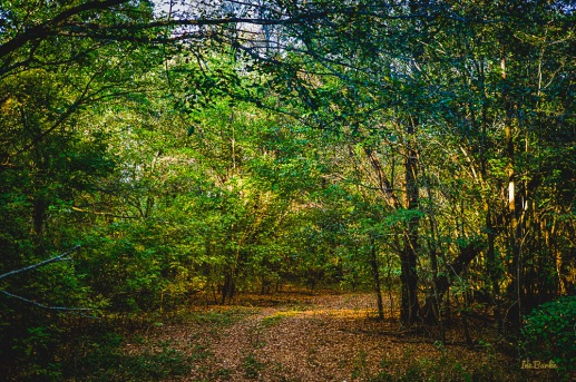 151010-L1012114_HDR-Edit-In the Woods5