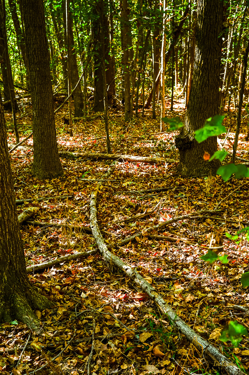Campers Nature Trail-151019-L1012301-Edit