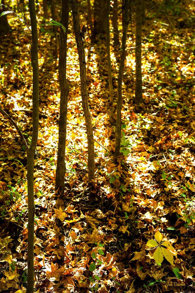 Campers Nature Trail-151019-L1012330-Edit