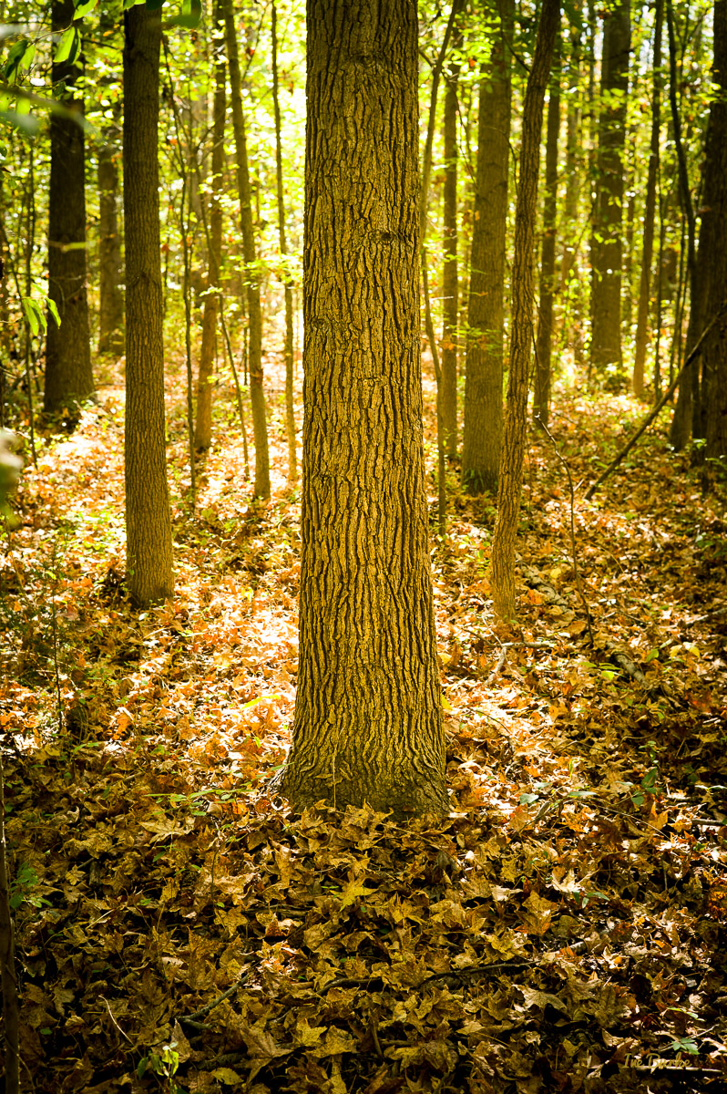 Campers Nature Trail-151019-L1012335