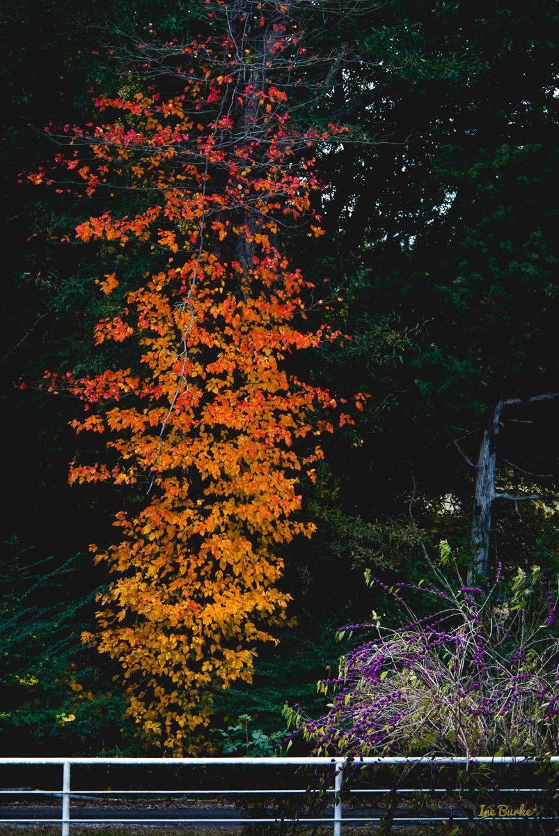 Fall Foliage 2014-141111-146_0078