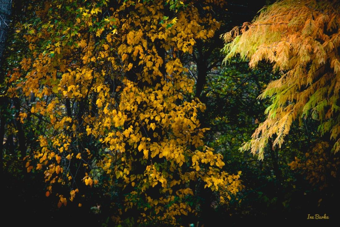 Fall Foliage 2014-141111-146_0082