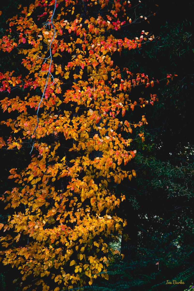 Fall Foliage 2014-141111-146_0085