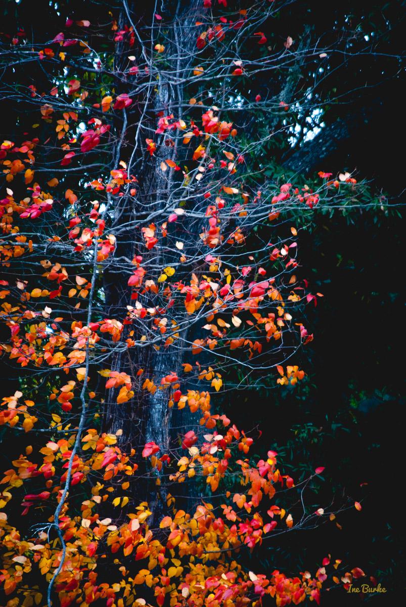 Fall Foliage 2014-141111-146_0088