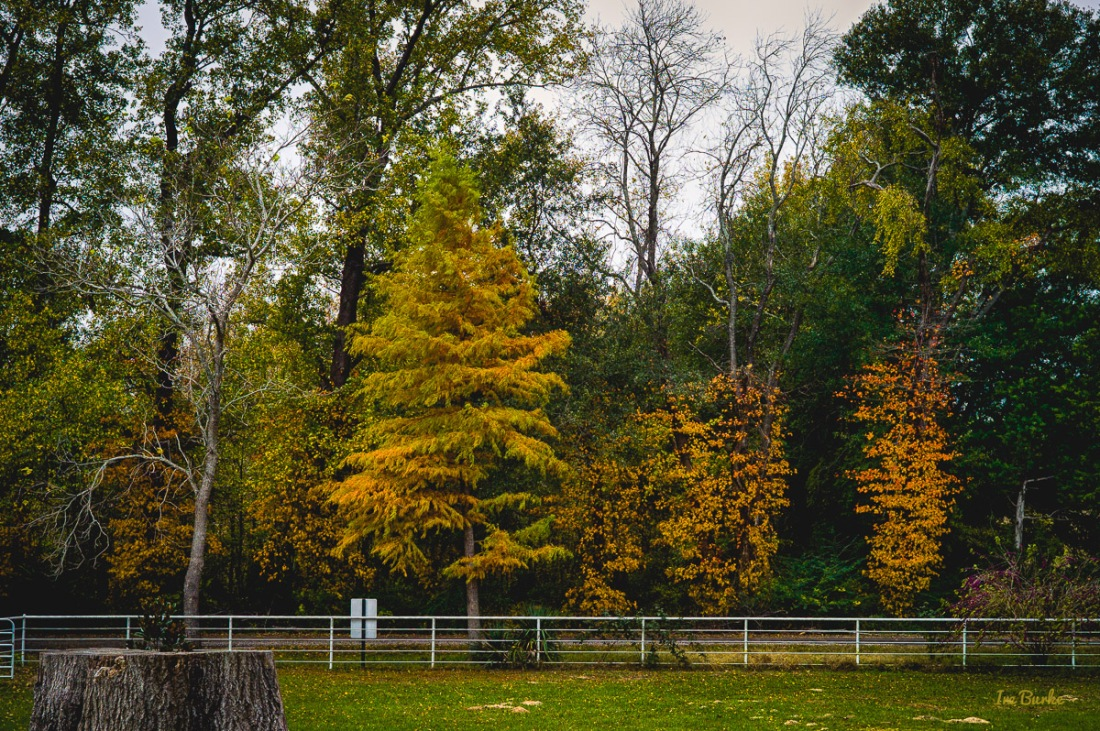 Fall Foliage 2014-141111-L1008297_HDR
