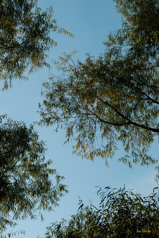Fall Mill Creek-141024-146_0213-Edit