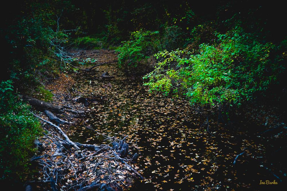Fall Mill Creek-151021-L1012373